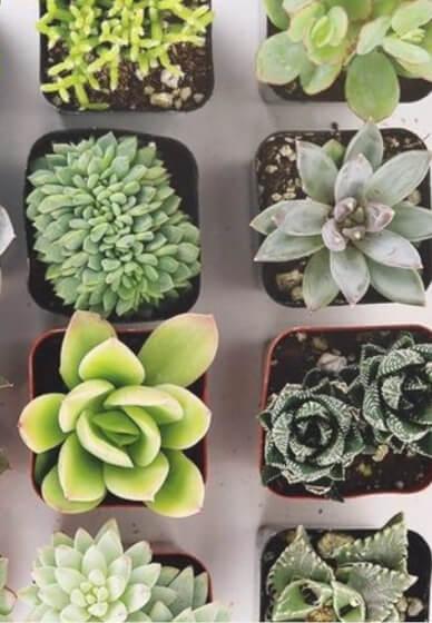 Succulent Kokedama Craft Box / Kit